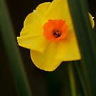 A Sunny Yellow by Joe Mortelliti