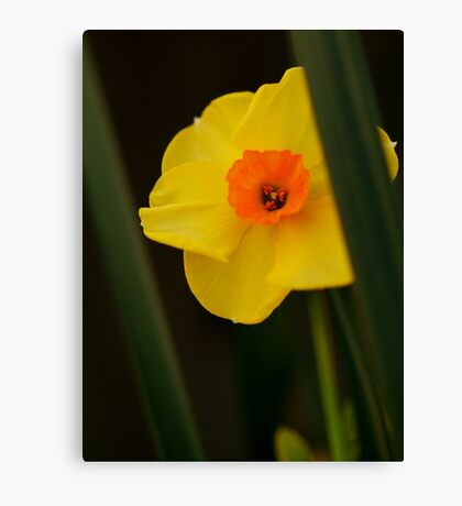 A Sunny Yellow Canvas Print