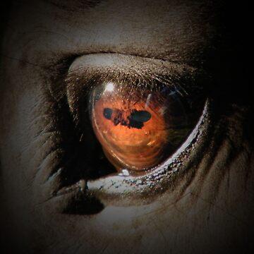 Eye of the Beholder by RedneckCowgirl