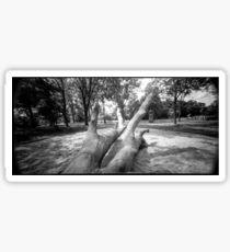 Pinhole Tree Sticker