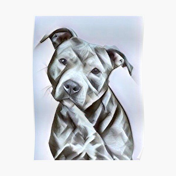 Pit Bull dog lover, a beautiful design of a Blue Nose PitBull of this gentle loyal breed Poster