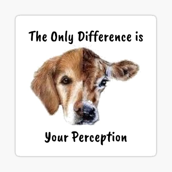 animal lover and vegan quote  Friends not Food - the only difference is indifference and it breaks my heart. go vegan for the love of animals Sticker
