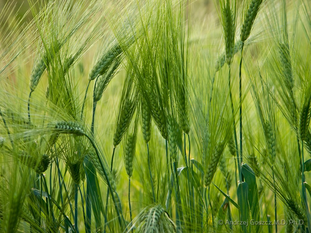 Views 5201 ♥ ♥ ♥ ♥ series . Green Green Grass Of Home. Tom Jones & Brown Sugar Story.  by © Andrzej Goszcz,M.D. Ph.D