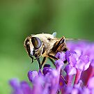 bee by AndyReeve