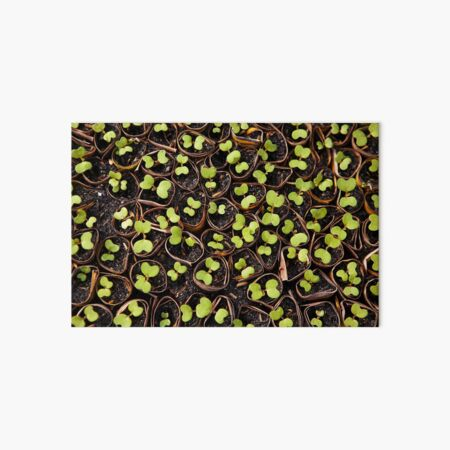 Growing Sprouts | Colour Travel Photography Art Board Print