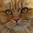 SeaSide Cat by Bill Morgenstern