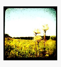 TTV Fields Photographic Print