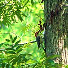 Woodpecker and the Baby by DottieDees