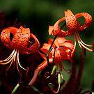 Orange Lilies by Larry Trupp