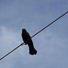 Bird On A Wire by WildestArt