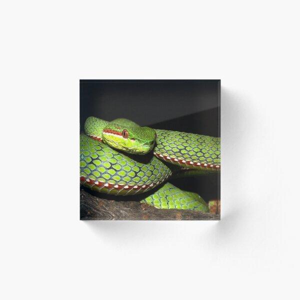 Green viper snake Acrylic Block