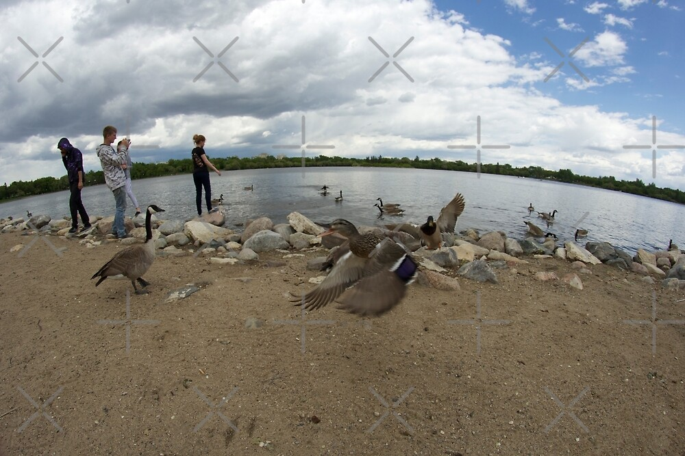 Ducks in Wascana Park  by Raquel Fletcher