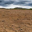 Termites & cow pads by MDC DiGi PiCS
