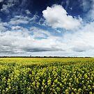 Geelong Canola by Peter Redmond