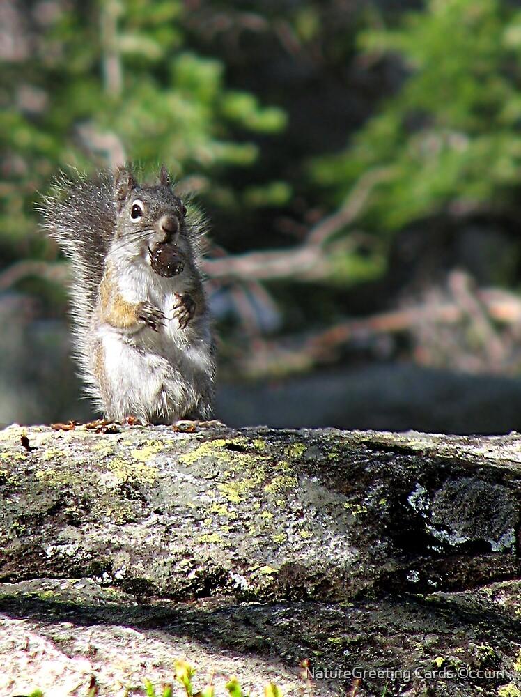 Sometimes Ya Feel Like A Nut by NatureGreeting Cards ©ccwri