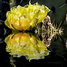 Yellow Cactus Flower by George Lenz