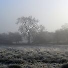 Frost & Mist  (November)  by Trevor Kersley