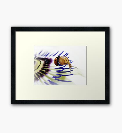 Passion impossible  Framed Print