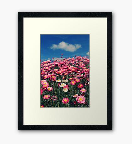 Field of dreams... Framed Print