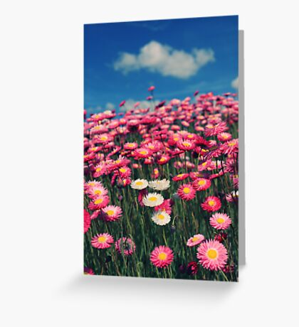 Field of dreams... Greeting Card
