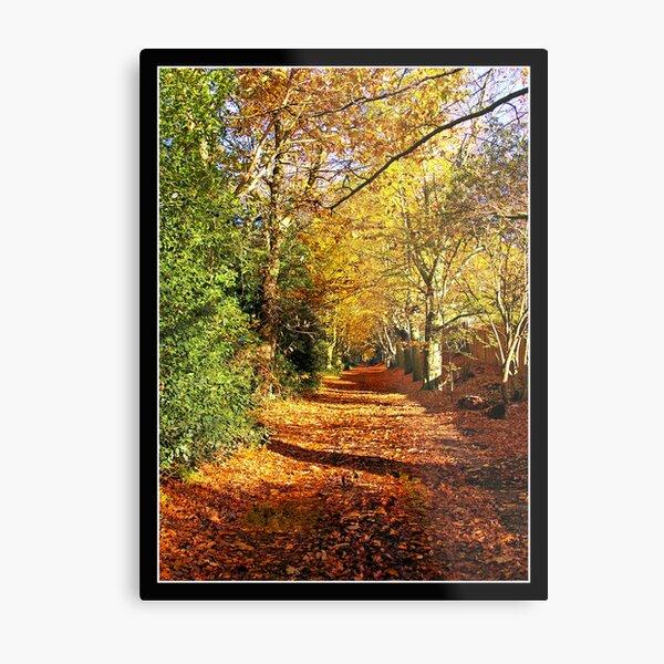 Woodland scene,Norwich, Norfolk, UK Metal Print