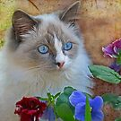 """""""Do these Pansies make my eyes look blue ...?"""" by Rosehaven"""