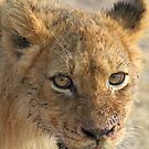 Happy well fed lion cub!(That buffalo tasted really good!) by Anthony Goldman