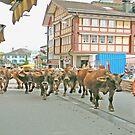 Appenzell Switzerland Cow March by Monica Engeler