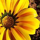 Yellow with Orange stripes by Chanzz