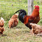 Rooster & Lady Friends by AnnDixon