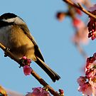 Chickadee: Bathed in a Fading Light by Wolf Read