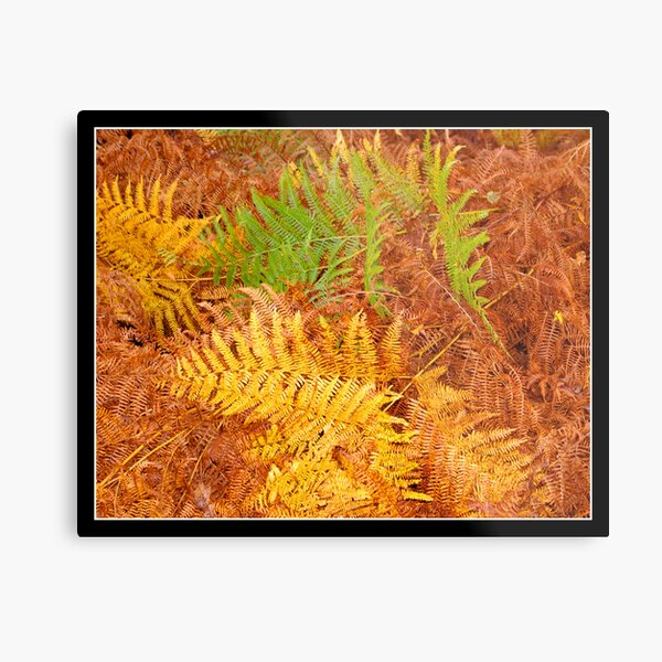 Ferns in autumn light 2 Metal Print