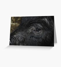 Pig Close Up Greeting Card