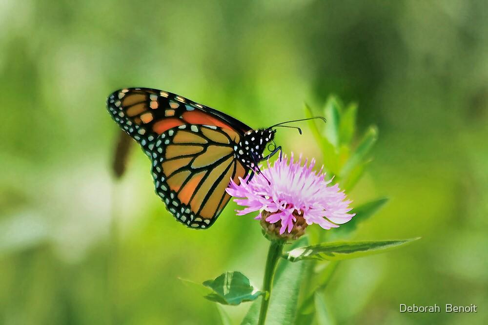 Monarch On Wildflower by Deborah  Benoit