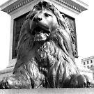 Trafalgar Square Lion by ACBPhotos