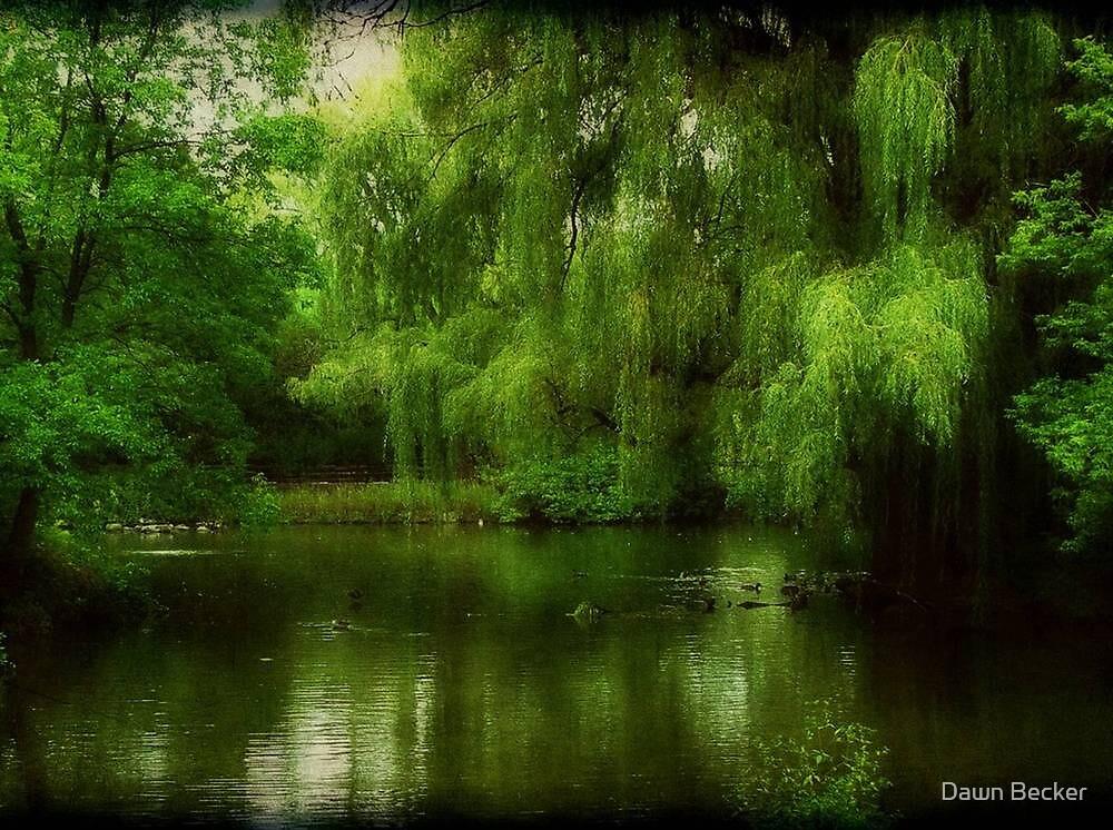 Around the Aviary ©  by Dawn Becker