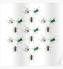 Tiger Beetle Pattern Poster