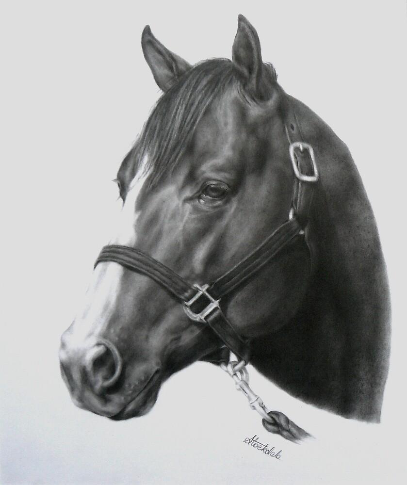 Quarter Horse by Margaret Stockdale