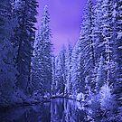 Depths of Winter by Tori Snow