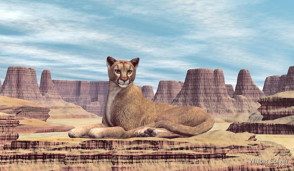 Desert Canyon Cougar by Walter Colvin