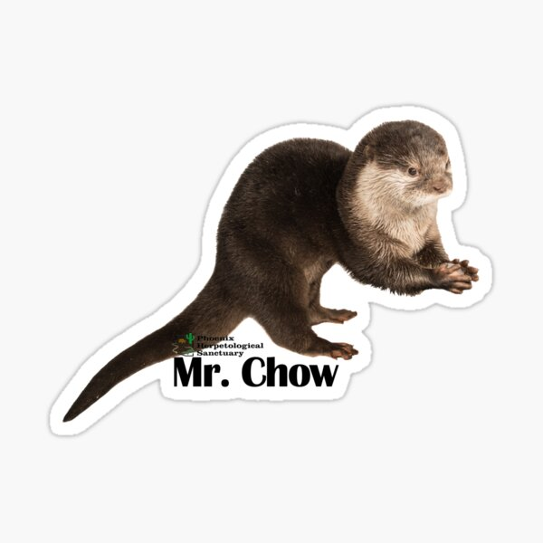 Mr. Chow the Asian Small Clawed Otter Sticker