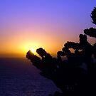 Sydney Sunrise by Mick Duck