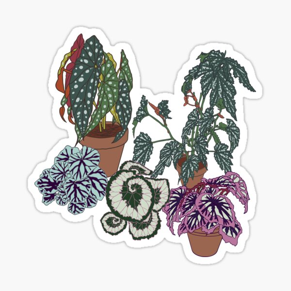 Begonia Illustrated Print  Sticker