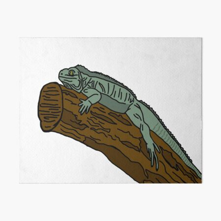Iguana Art Board Print