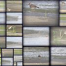 A Collage of Shore Birds by DottieDees
