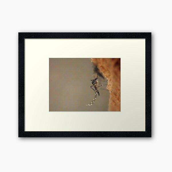 ©NS Stripes Aedes Aegypti IA. Framed Art Print
