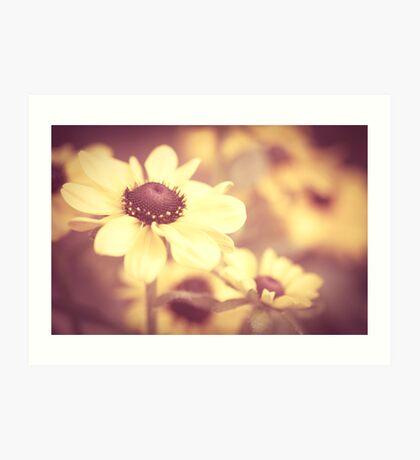 Sweet and warm - Rudbeckia flowers - Art Print