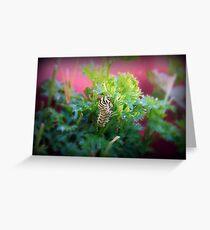 Swallowtail Caterpillar 1 Greeting Card