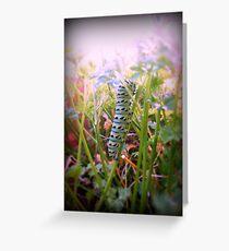 The Swallowtail Caterpillar 2 Greeting Card