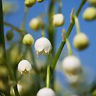 Flowers by Helen Shippey